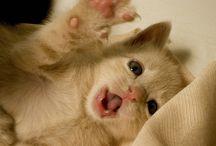 Cuccioli!!! Awwww so cute!