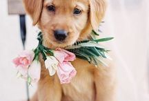 Wedding Ideas for Pets