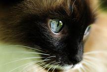 Gatos / Cachorros / Pets