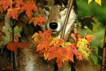 Wolves / by Catherine Seiler