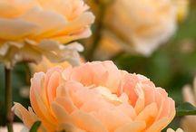 Palett - persika, rosa, vit, brun, gul