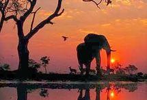 Travel | Southern Africa / Botswana Lesotho Madagascar Malawi Mauritius Mozambique Namibia Reunion South Africa Swaziland Zambia Zimbabwe