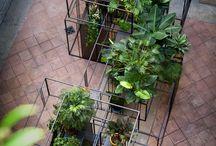 Planting - INDOOR