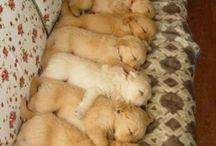 Puppy Love..... / by Amanda Jarrett