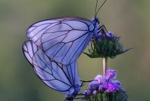MOTHER NATURE: butterfly