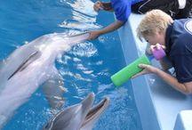 Clearbook water aquarium