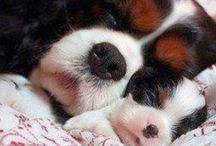 cute dogs / cute puppies
