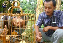 13 Manfaat Memelihara Burung yang Hanya Dirasakan Pria