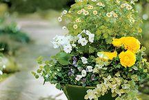 Λουλούδια κ κήποι/flores y jardines