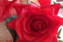 Rose / Rosa in gum paste