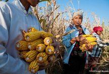 SMALLHOLDER FARMING / Zero Hunger = 100% increase in smallholder productivity and income