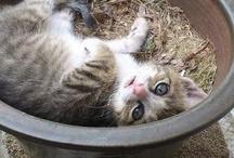 γατακια που θελω να αγκαλιασω