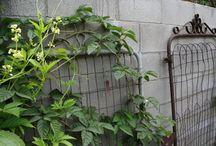 gardening/gardening tips / by Shanna Sims