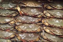 Soft shells / Headed to the mountains!