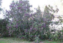 Mallorca / Мальорка в апреле. Botanicactus. Ботаникактус. Цветы, деревья, кактусы.