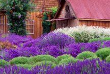 Gorgeous Garden / by Kimberly Kuhlman