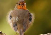 Vogels / Vogels