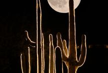 Moonbeams / by Marsha Ross