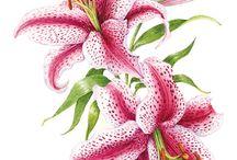 Ботаника иллюстрации