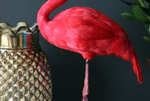 My Flamingo love <3