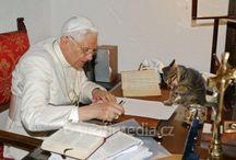 Berømtheter + katter = sant! <3