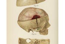 Anatomy & art