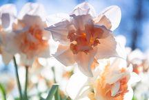 Bloemen / Foto's van bloemen en planten
