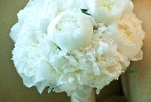 Jenna's flowers / by Cathy Kilmon