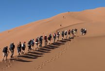 Morocco Camel Trekking / Get The Amazing Trekking in Morocco With Camelsafaries.We organize Morocco Adventure Tours,Morocco Camel Trekking & Morocco Desert Tours for Enjoying your Morocco Vacations.
