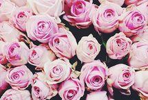 floral. / by taylor demaro