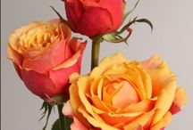 Shades of Orange / Ideas for wedding  flowers with Orange tones.
