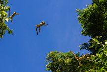 Tree Top Manu