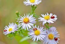 květiny, rostliny, louky...