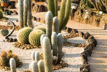 о кактусах с любовью