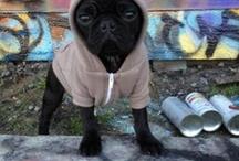 Ghetto Pugs