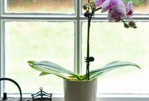 záhrada / kvet, rastliny, záhradné dekorácie