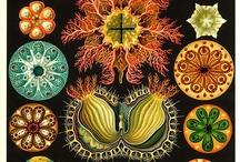 Ernst Haeckel, Kunstformen der natur
