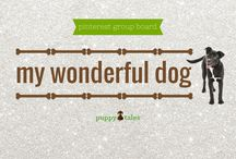 My Wonderful Dog / This group board has been set up by Puppy Tales as your place for tributes & celebrating your beloved dog. Pin YOUR dog photos & share their story here. To be invited to this board: 1. Follow Puppy Tales on Pinterest (not just the board you want to pin to) & 2. Either: (i) leave a message on the JOIN OUR BOARD Pin or (ii) send an email with your Pinterest url/name to hello@puppytales.com.au. Rules: 1. No more than 2 pics per day 2. Entertain & share. 3. No advertising, shocking or defaming.