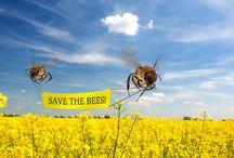Bee Organizations