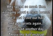 Pet Love / Why I love pets so much and other true statements about living with furry children.