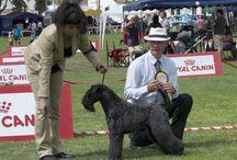 Exposiciones Caninas / Exposiciones Caninas