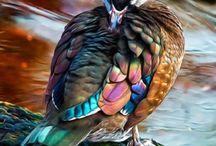 Birds color palletes