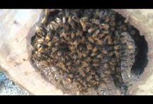 bee hive activities