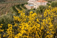 Perivoli Hotel / Top hotel for luxury and relaxation in the nature of Nafplio, Greece.
