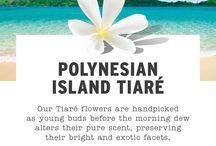 Polynesian Island Tiare