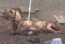 Stop Mass Killing of Romanian Dogs