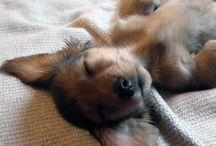 Long dog. Dachshund love. / All things dachshund / by Christine K