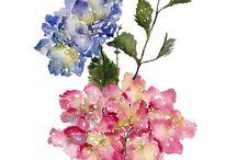 more Watercolours / Flowers etc