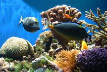 La Jolla Underwater Park and Other San Diego Attractions / If you're fascinated by sea-life, enjoy taking a dip in the ocean, or are an avid snorkeler, you simply cannot miss the opportunity to book a San Diego vacation rental, While you're there, check out attractions such as the La Jolla Underwater Park! Just check out these photos!