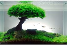AQUASCAPE DESIGN / Aquascaping is the art of arranging plants, rocks, and driftwood into beautiful underwater landscapes. It's one of those rare art forms that blends science, nature, and design all in one. Some of the professional aquascapes are simply breathtaking!